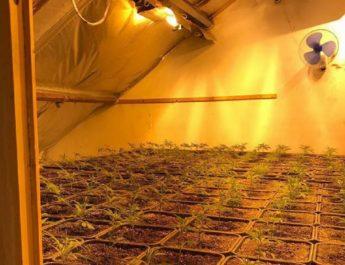 Cannabis nursery found in Willem van Ruysbroeckstraat, Geldrop