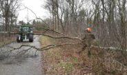Staatsbosbeheer still dealing with storm damage